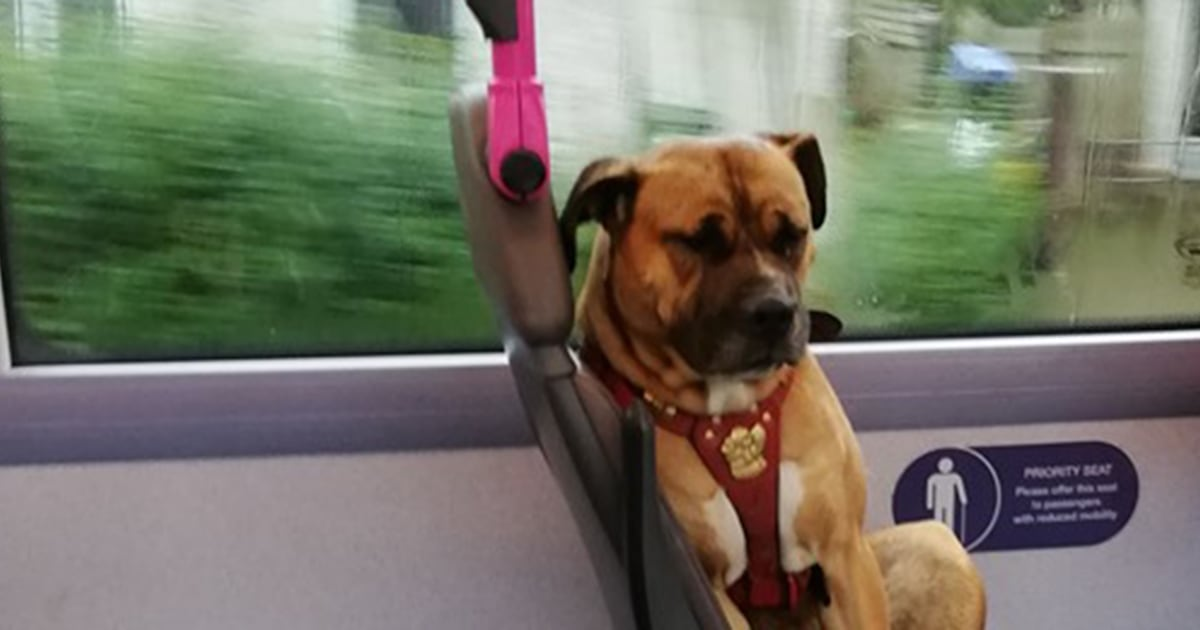 Sad dog photographed riding bus alone in England