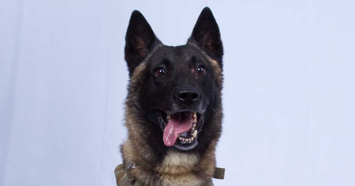 Hero dog injured in al-Baghdadi raid headed to White House