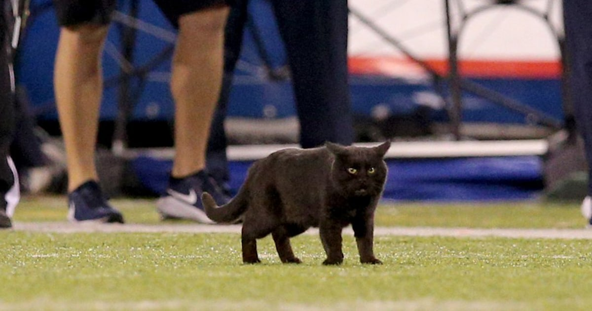 The real star of Monday night's Cowboys-Giants game was a black cat