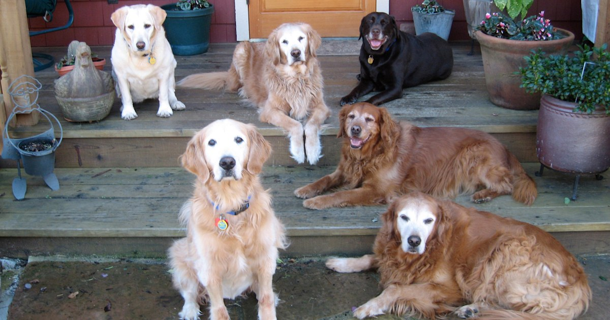 Why senior dogs, often the last to be adopted, make great pets