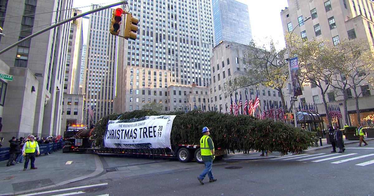 Meet the new 2019 Rockefeller Center Christmas tree