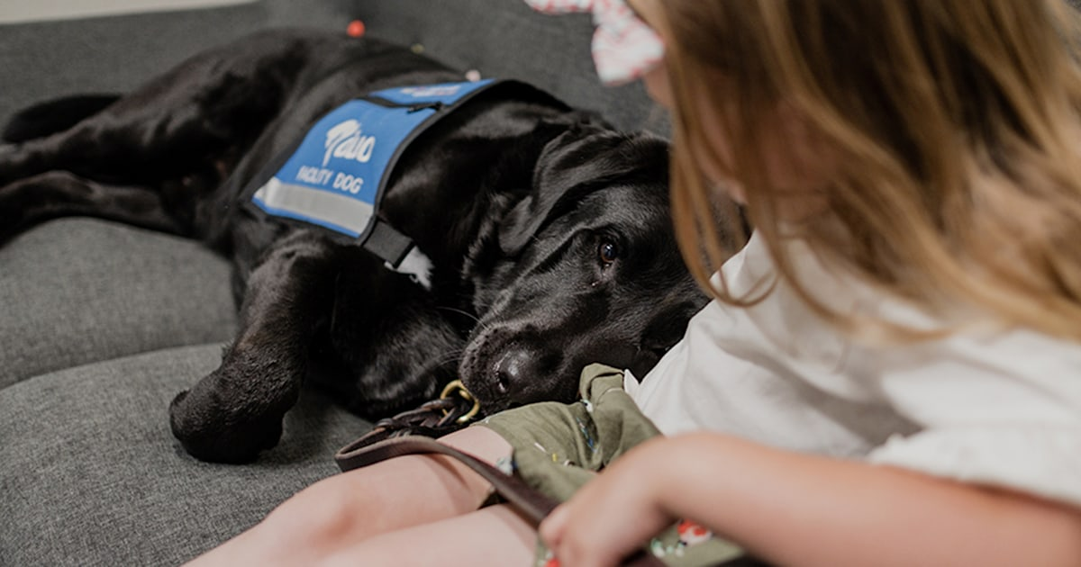 'I'm here for you': Dogs help young victims of abuse in courts, hospitals