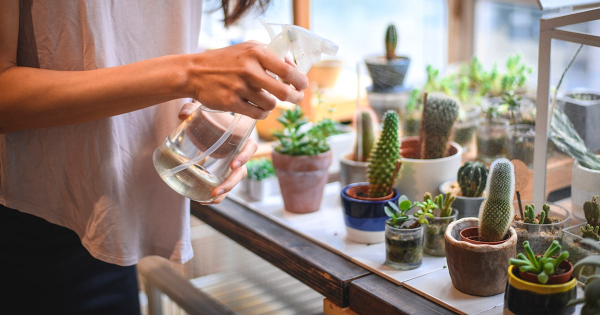 Interested In Succulents Here S How To Care For These Plants