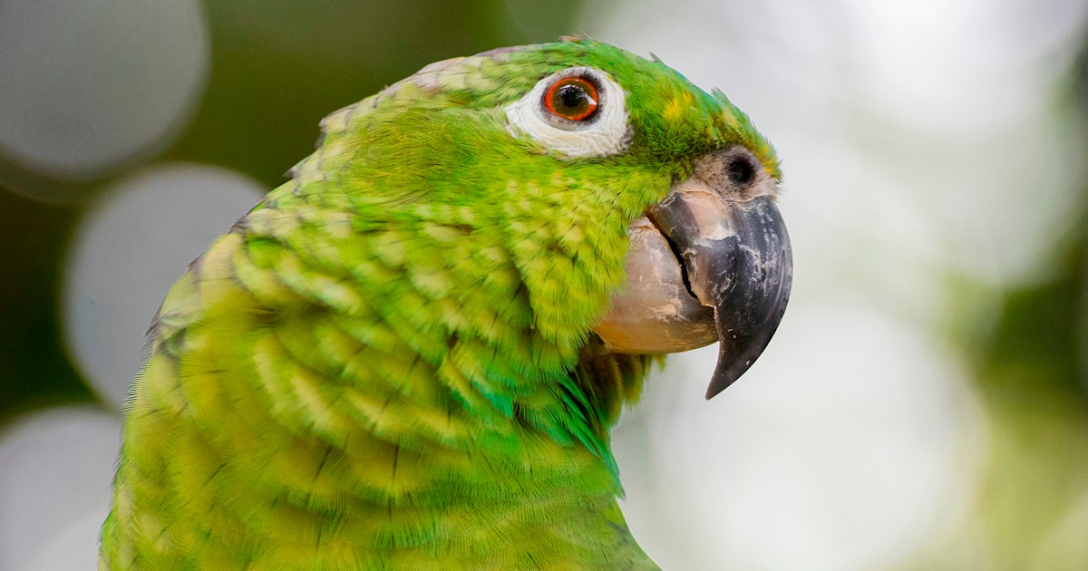 Florida police were called for a woman screaming 'let me out.' It was a parrot.