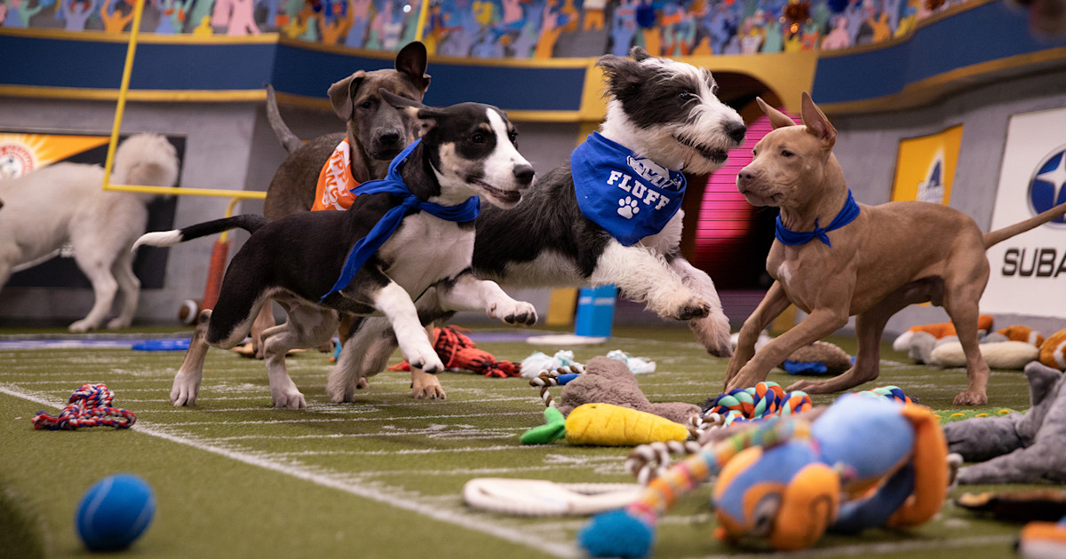 How to watch Puppy Bowl XVI: Meet the 2020 lineup!