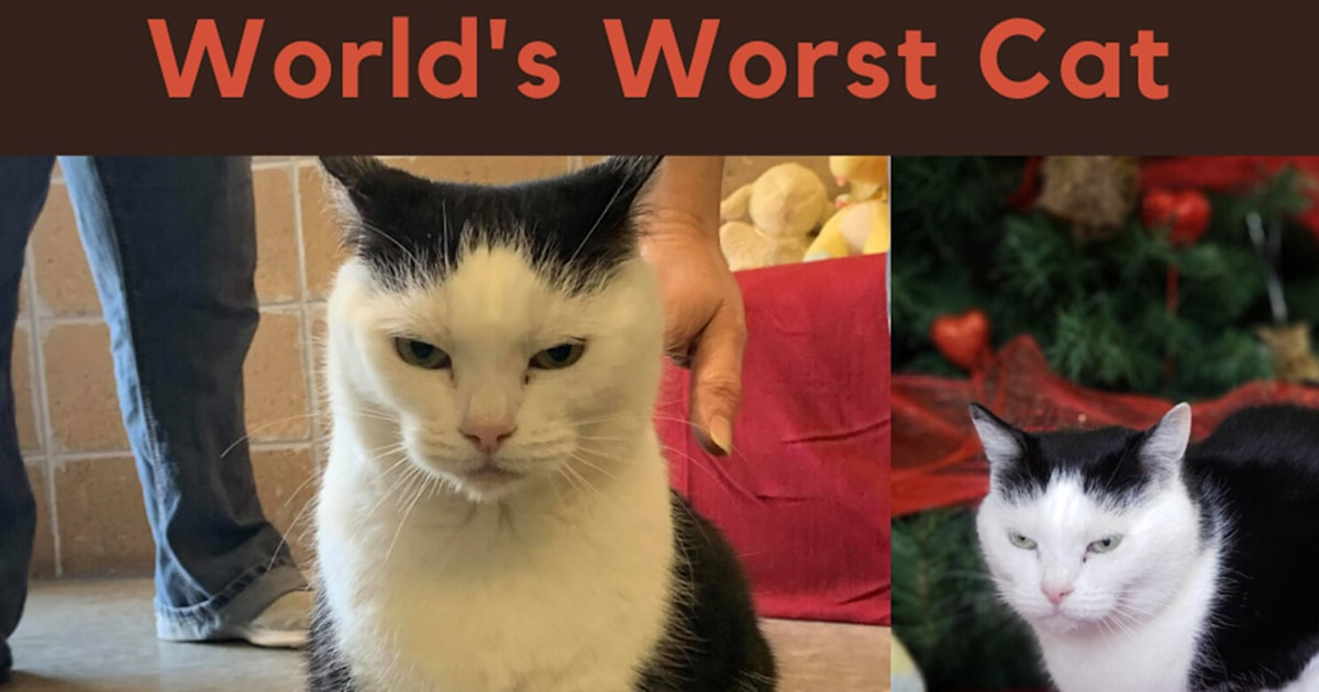 'World's worst cat': Animal shelter's honest ad goes viral