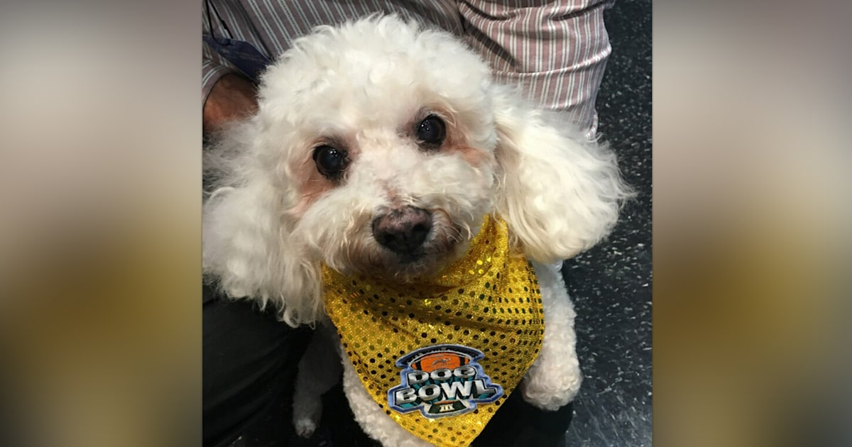 Dog dumped for being 'too old' makes triumphant return to Dog Bowl this weekend