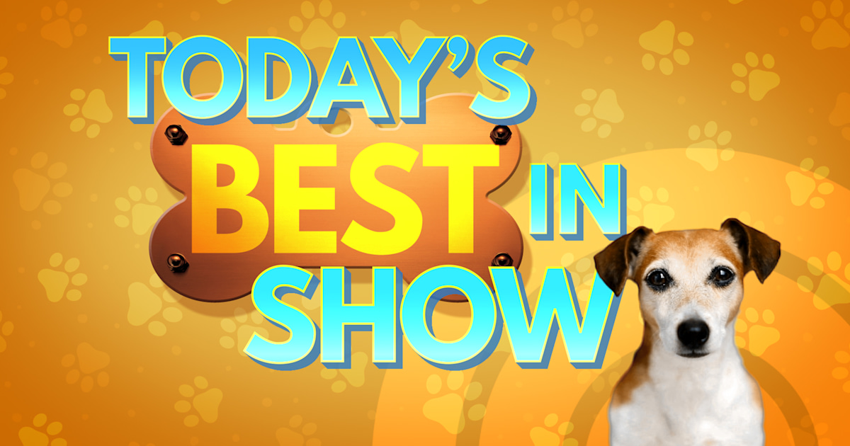 TODAY's 'Best in Show' contest has a winner!