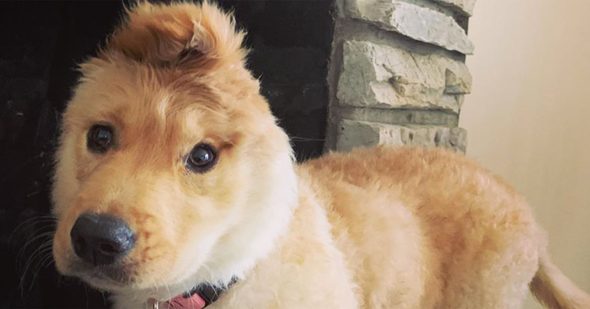 Rae, a 'unicorn dog' with an ear on top of her head, is viral hit on social media