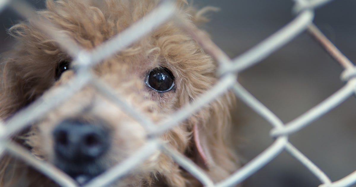 During coronavirus closures, what happens to animal shelters?
