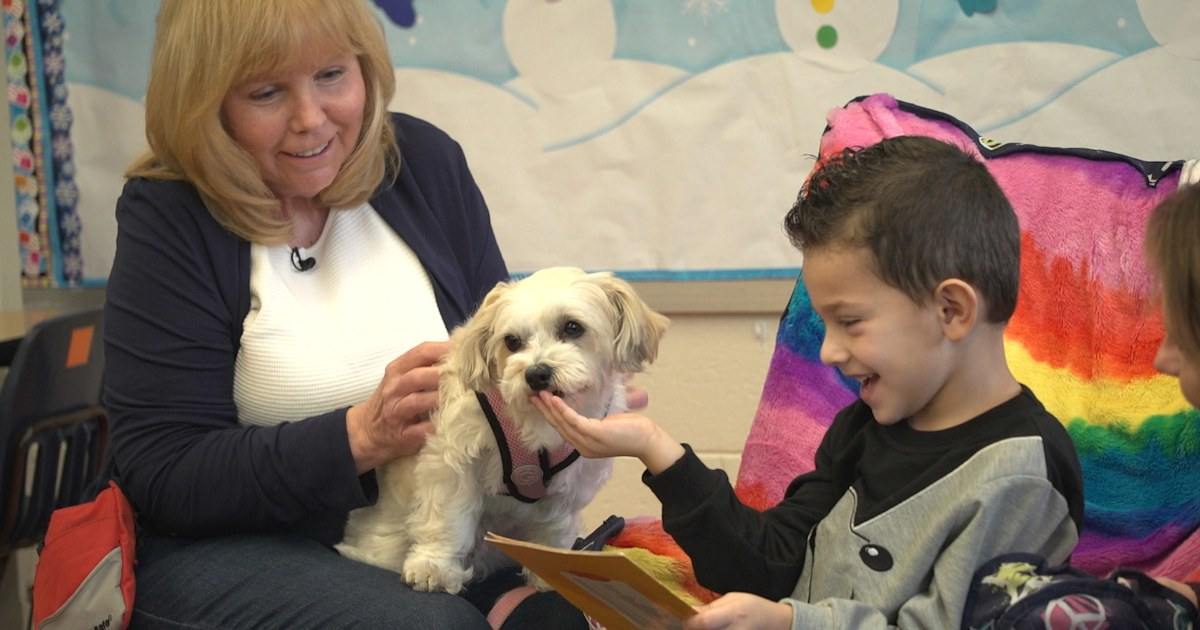 These therapy dogs ease anxiety, bring joy to kids and seniors in need
