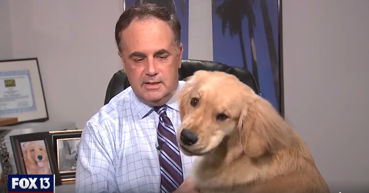 Weatherman Paul Dellegatto's dog interrupt at-home forecast
