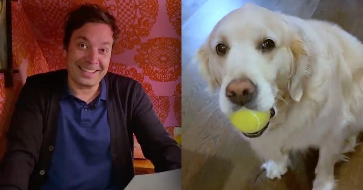 Watch Jimmy Fallon's dog, Gary, crash his monologue