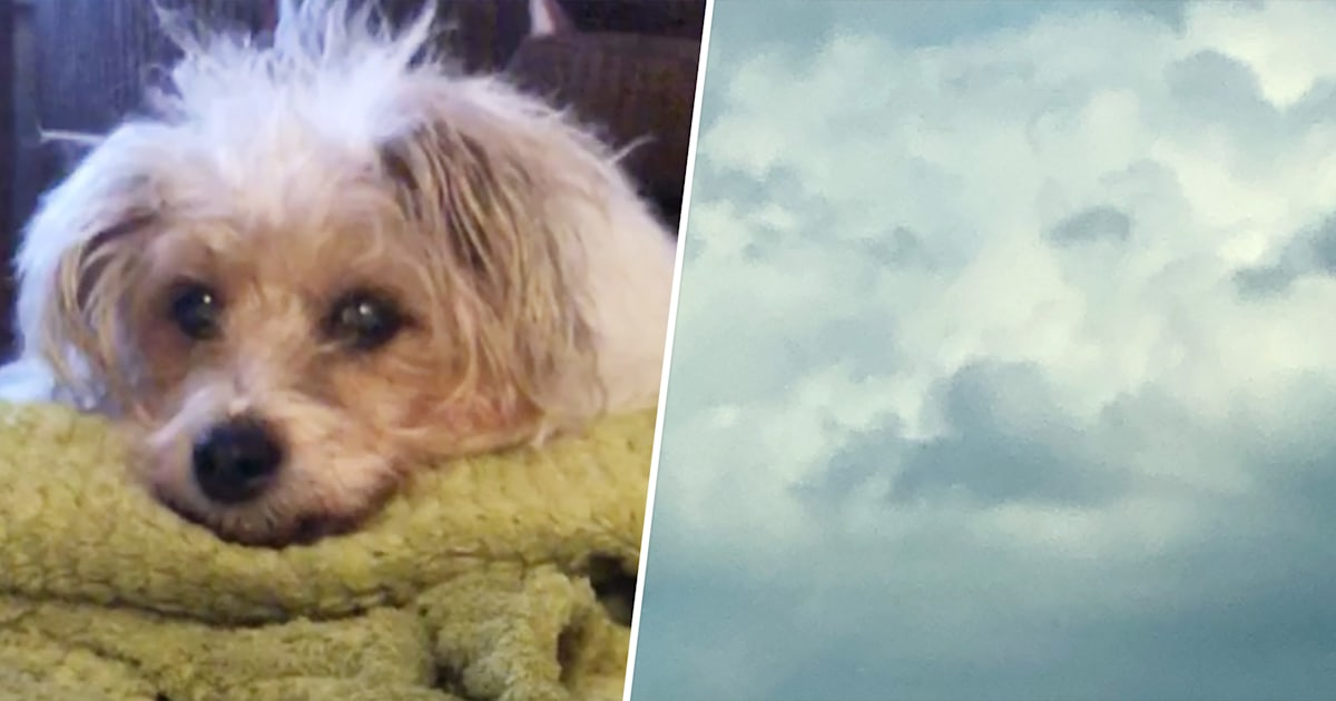Woman sees her dog's face in the clouds hours after pet's death