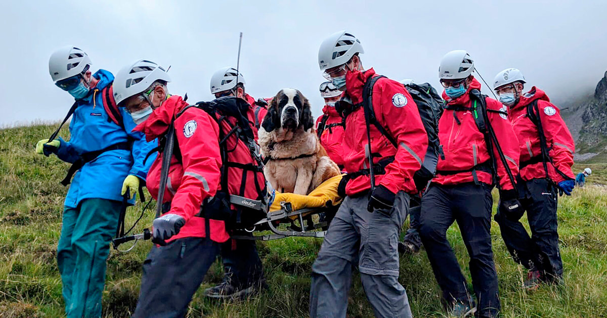 121-pound St. Bernard rescued from England's tallest mountain