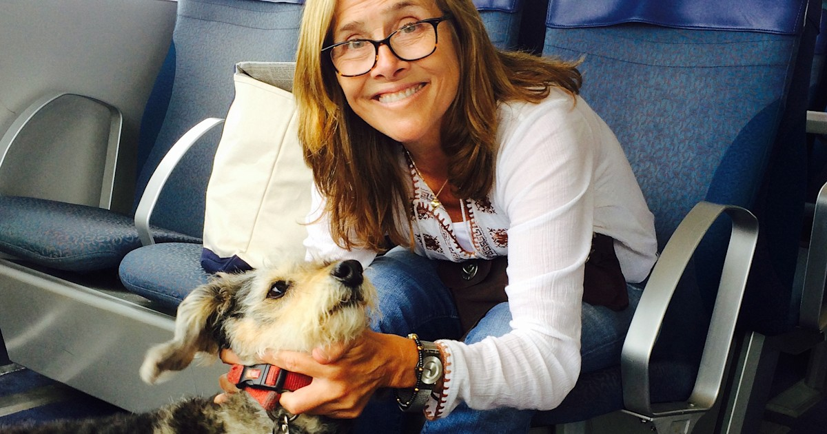 Meredith Vieira's 16-year-old dog, Jasper, survives coyote attack