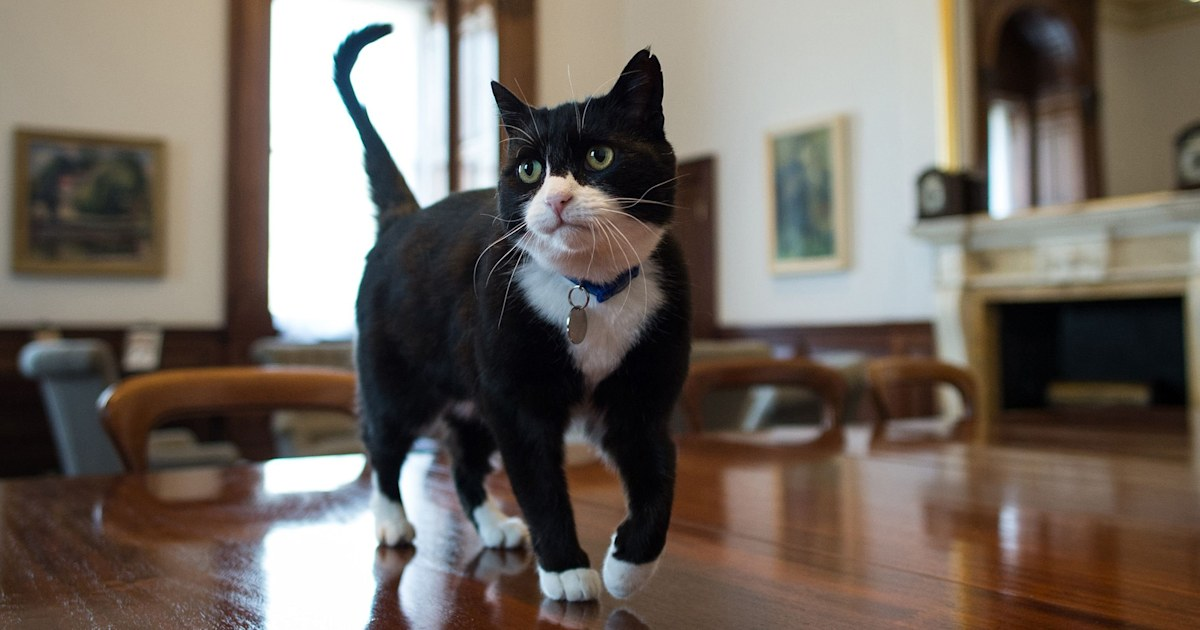 UK's top diplomatic cat announces retirement to 'enjoy some me-time'