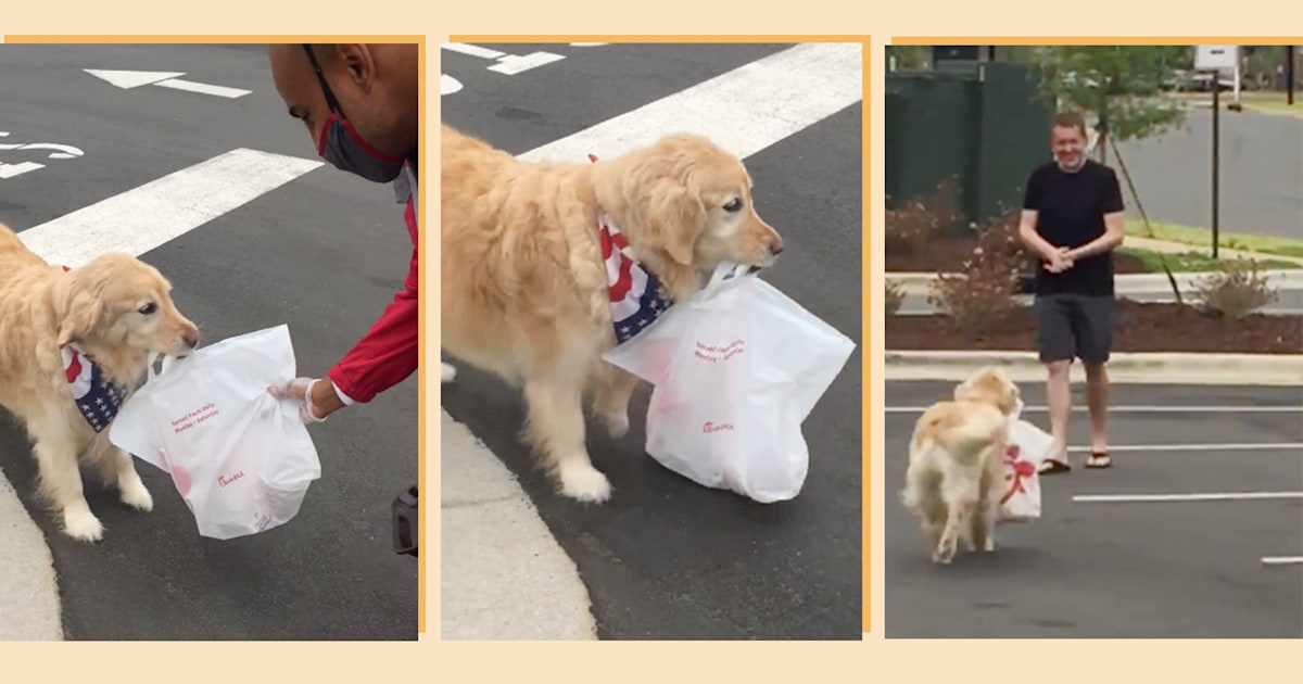 Video of a golden retriever fetching Chick-fil-A for her owner goes viral