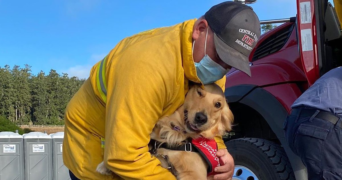 Kerith the golden retriever is offering comfort to California firefighters