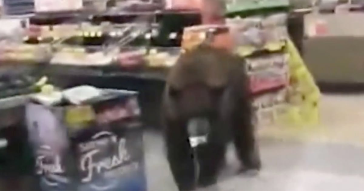 Giant bear seen wandering aisles of California grocery store