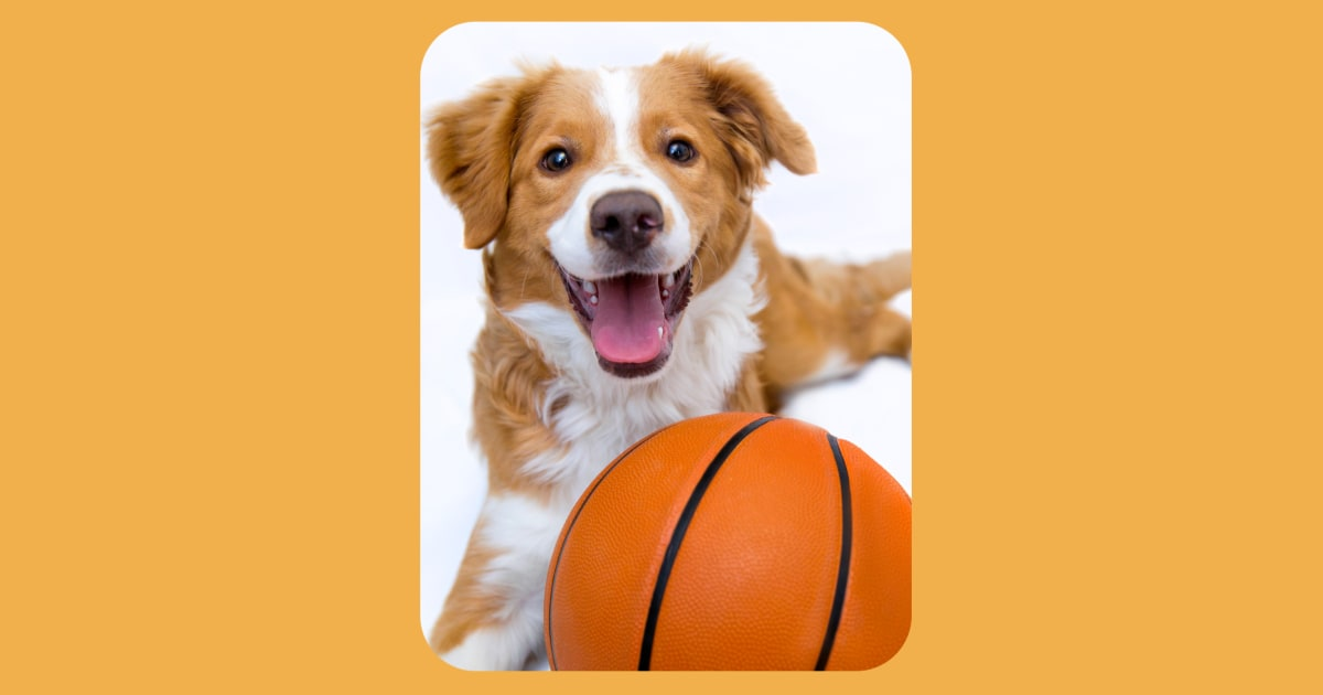 30 adoptable pets get 'courtside' seats at NBA playoff game