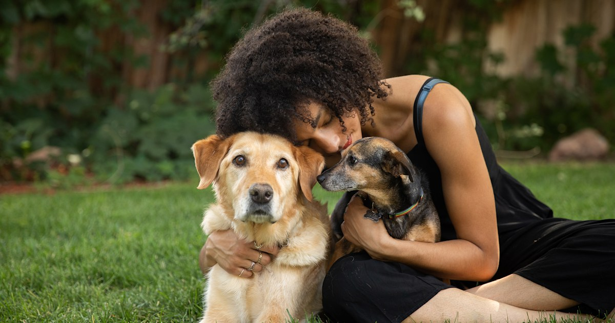 Americans are starting to give up their pets because of COVID-19 hardships