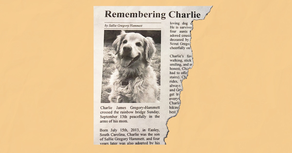 'Best boy': Glorious obituary for golden retriever touches hearts everywhere
