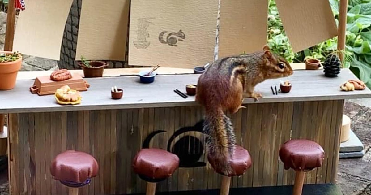 Food writer opened a restaurant during the pandemic — for a chipmunk