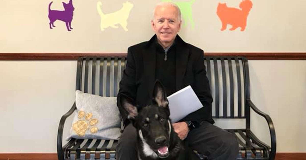 Please don't write off shelter dogs because of Major Biden