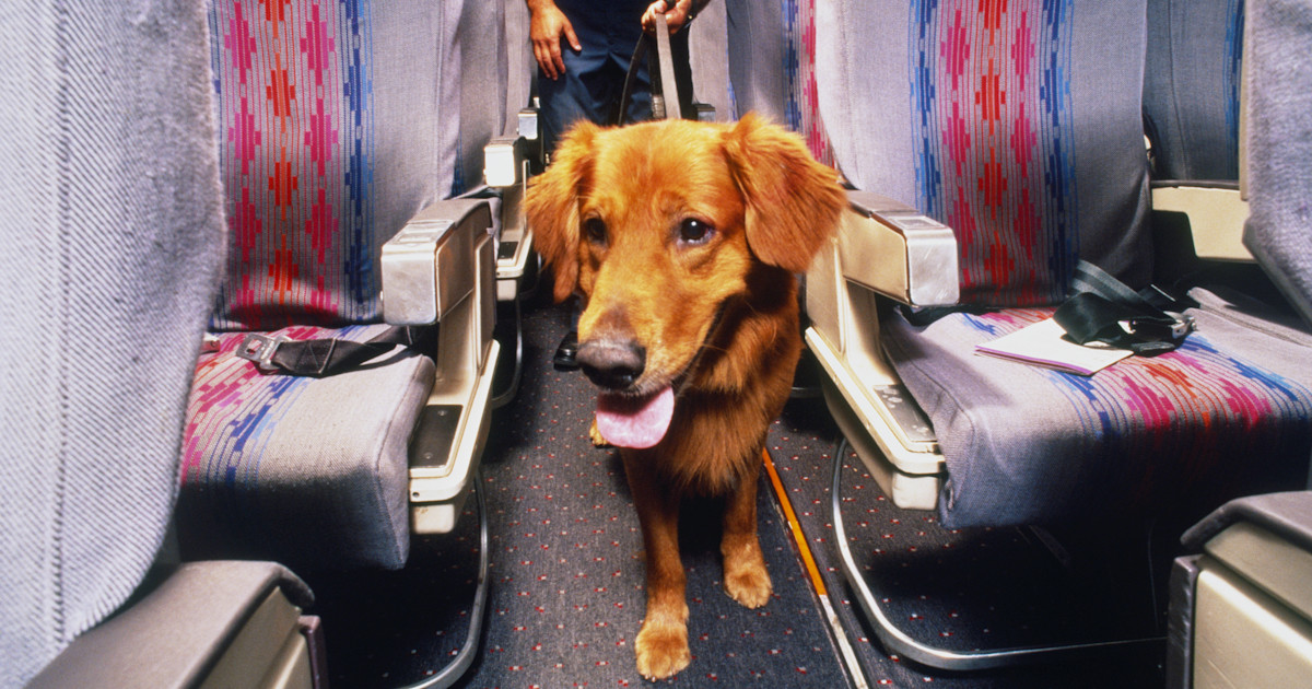 DOT rules emotional-support animals aren't service animals on flights