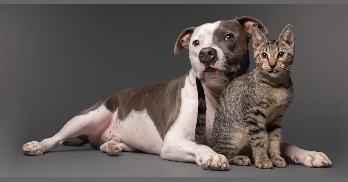 'Best buddies': Grieving pit bull finds joy again with new kitten companion