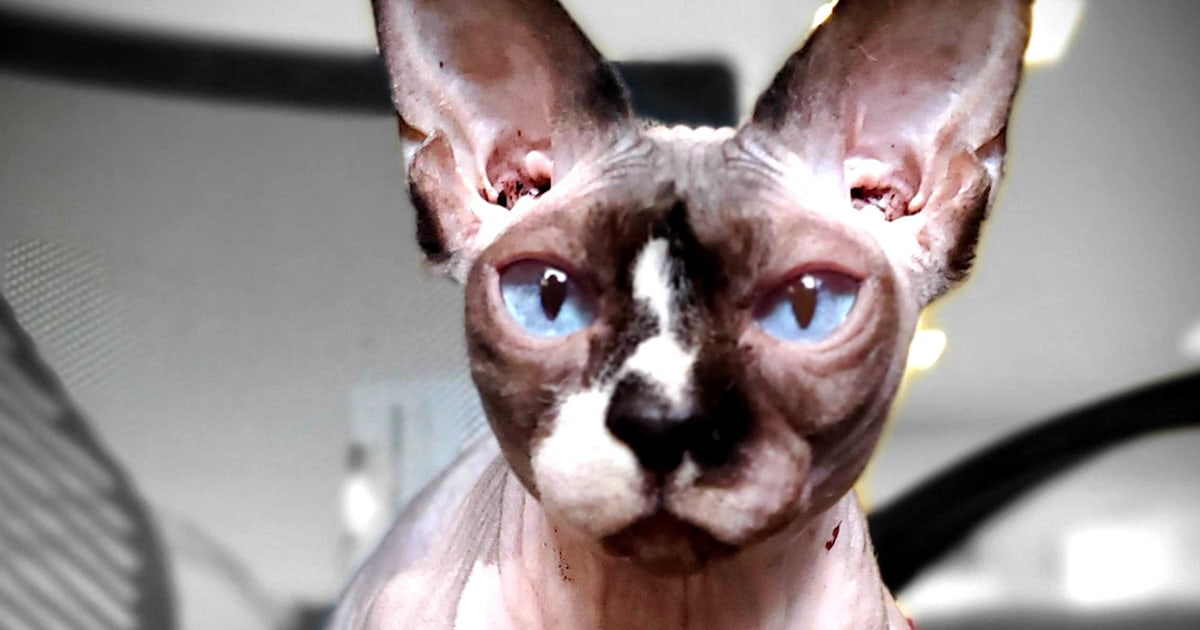 'Meditating' Sphynx cat helps traumatized kids bond with counselors