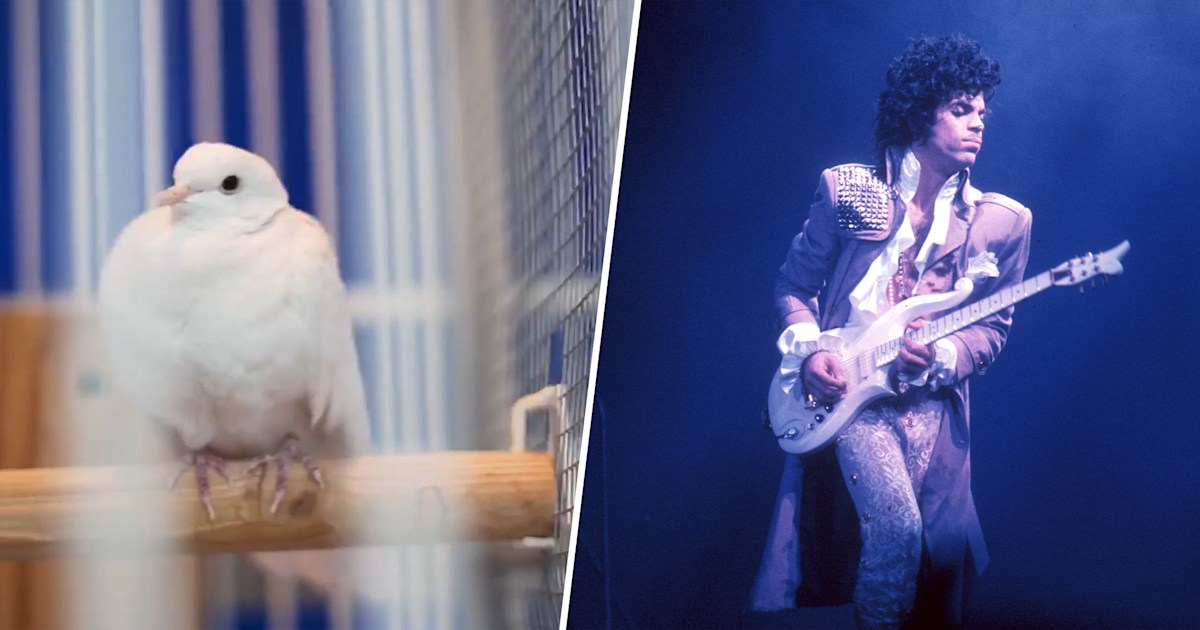 When doves cry: Prince's original pet dove Divinity dies at 28