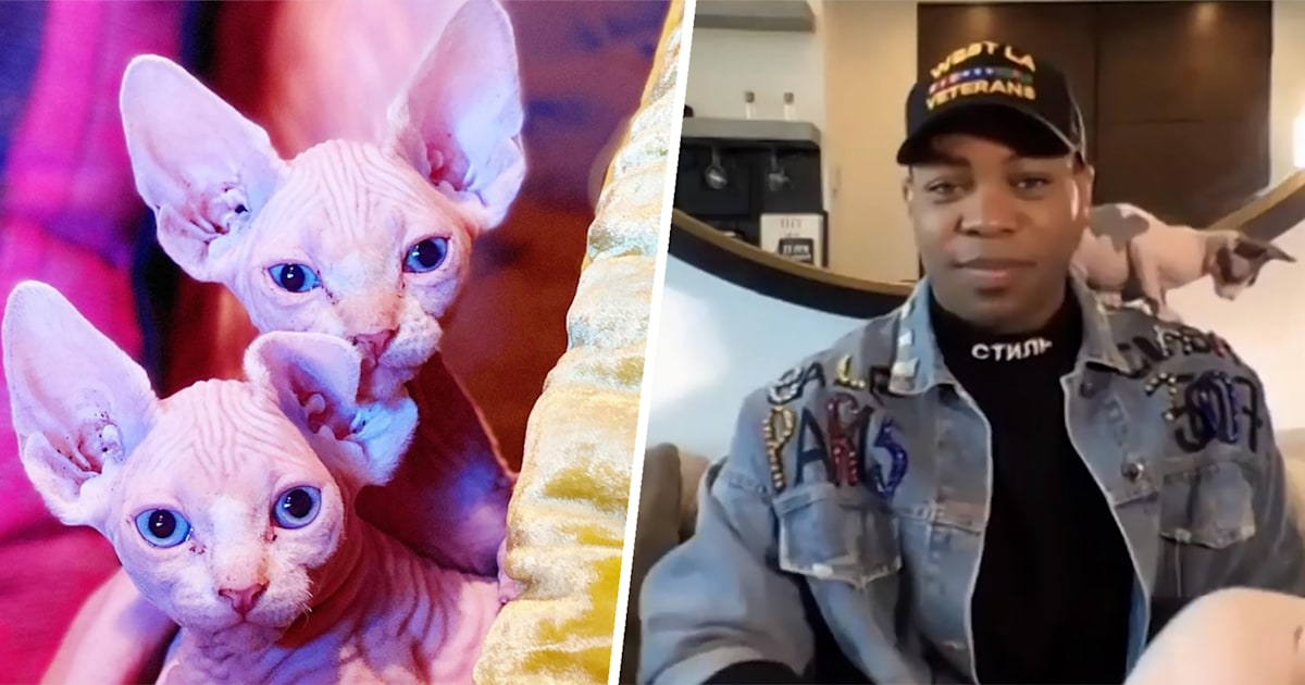 Todrick Hall shares why he named his cats after 'Mean Girls'