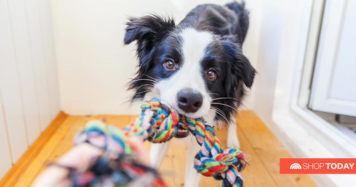 From chew toys to weighted vests, 8 must-haves for your pup