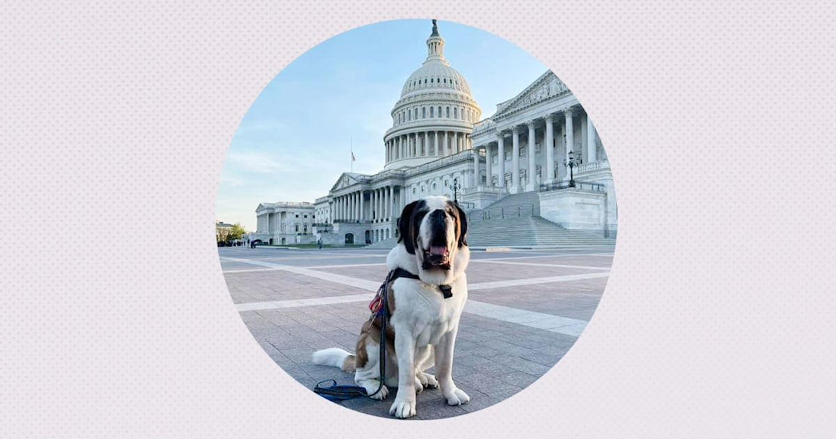 Social media sensation Officer Clarence offers canine comfort at US Capitol