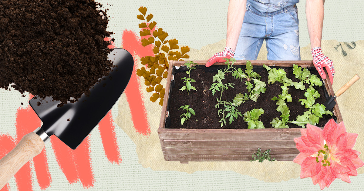 How to start your own veggie garden, indoors or outdoors