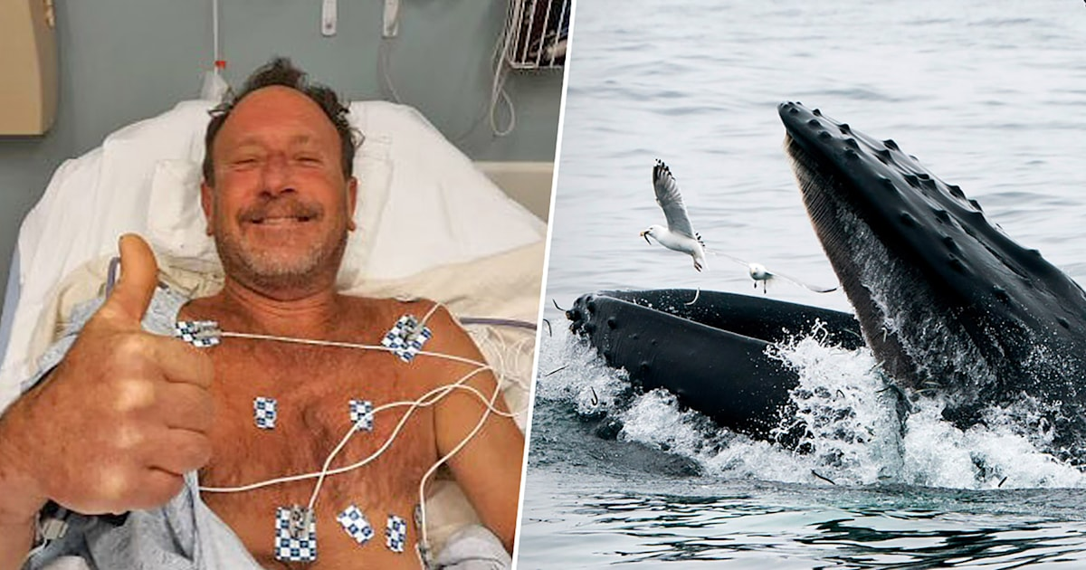 'Oh my God, I'm in the mouth of a whale': Hear how this diver survived scary ordeal