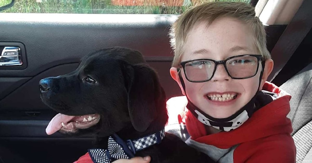 8-year-old boy sells beloved Pokémon cards to save severely sick puppy