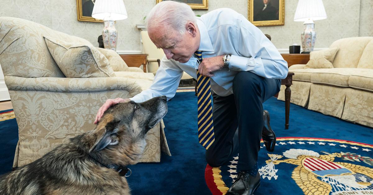 Champ, beloved Biden family dog, dies at 13