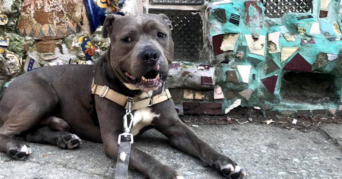 Meet the 'tongueless wonder dog' in need of a forever home