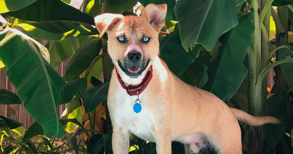 Woman shares hilarious adoption website for 'hellion' foster dog Hank
