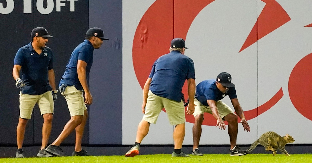 Cat in the outfield delays Yankees game for several minutes