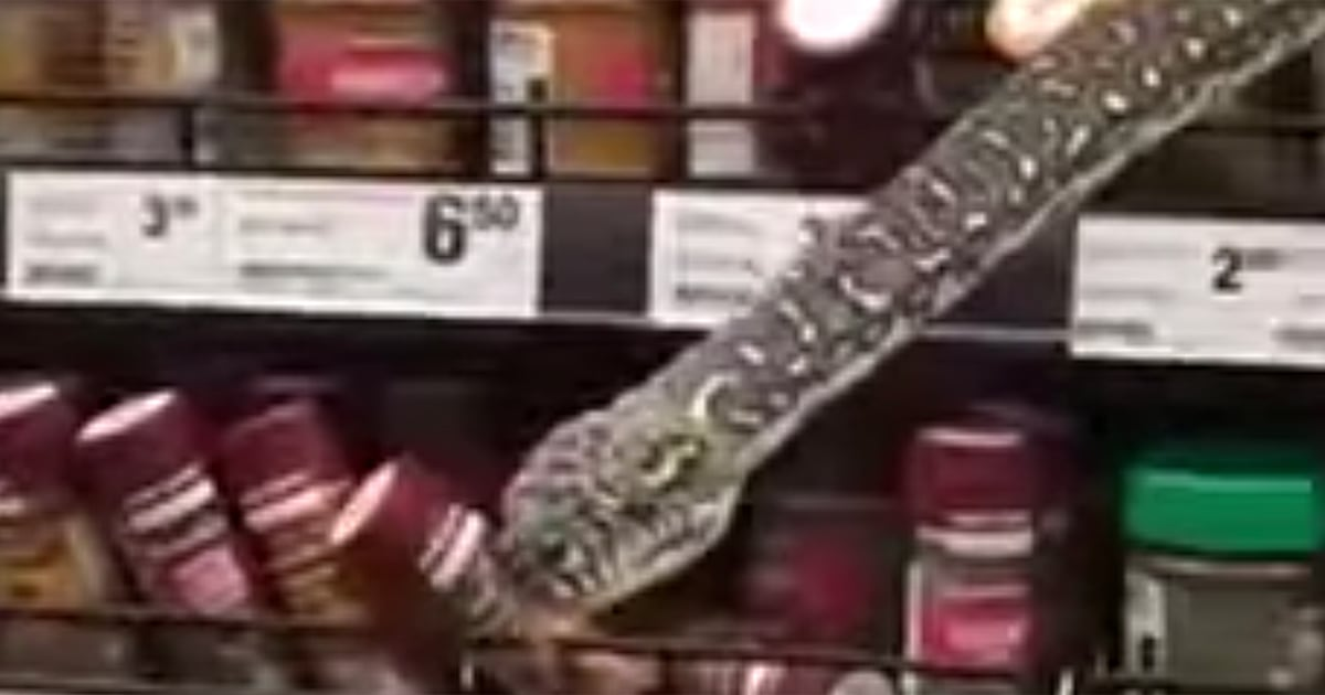 Shopper comes face-to-face with 10-foot python in supermarket spice aisle