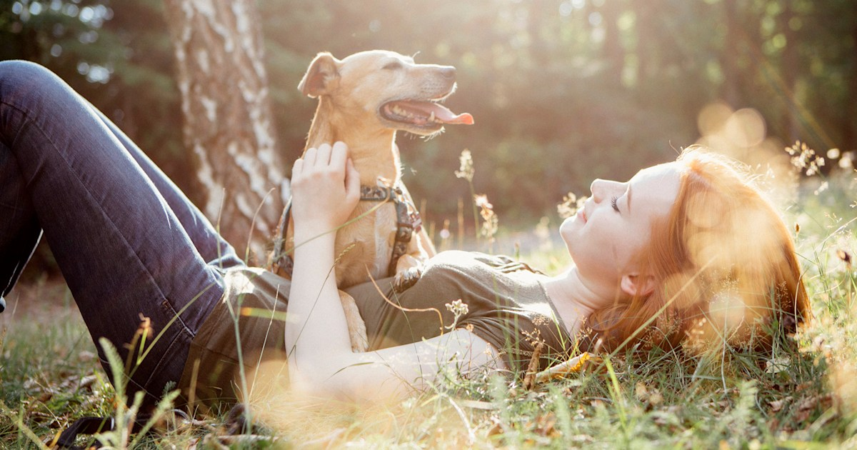 6 tips to establish a structured, healthy lifestyle for new rescue dogs