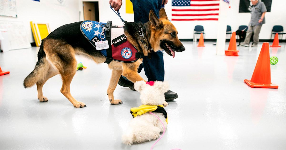 Biden signs bill providing service dogs for struggling veterans