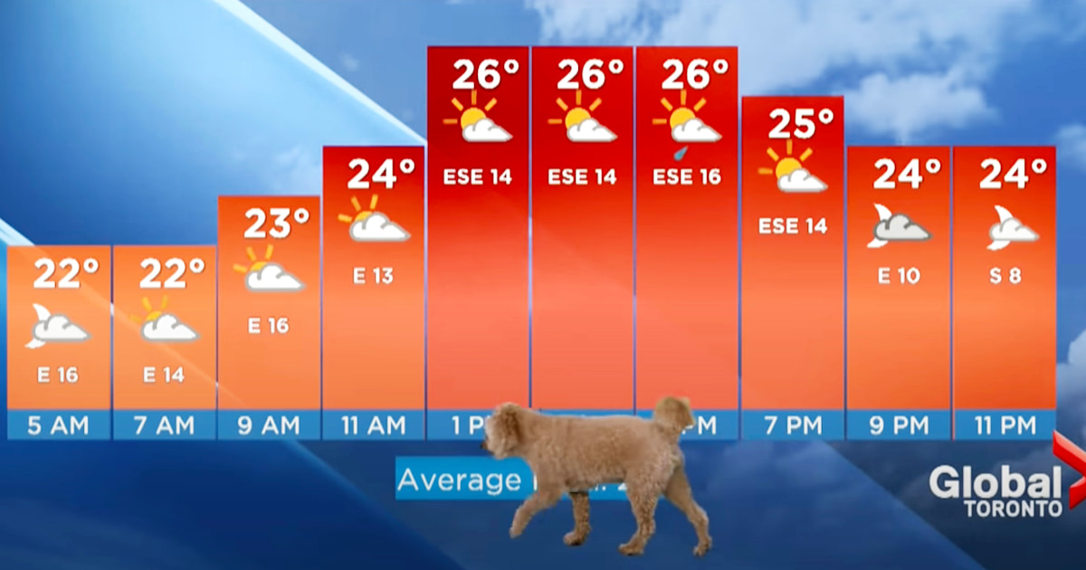 Meteorologist's dog steals spotlight, adorably interrupts the weather report