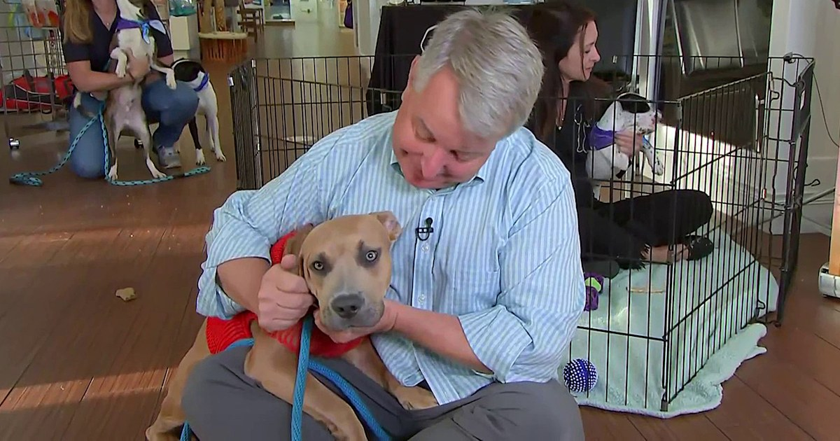 How animal shelters are helping save pets after Hurricane Ida