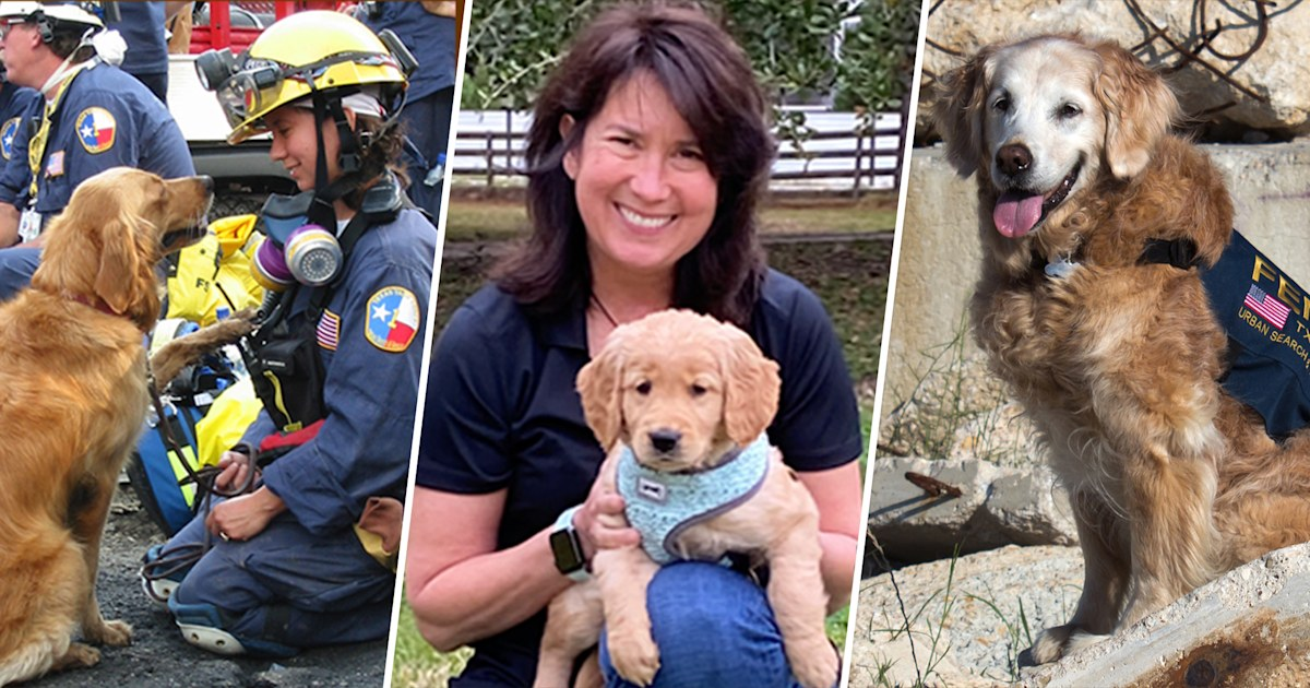 Last 9/11 search dog's legacy lives on in rescue work — and in a furry kid sister