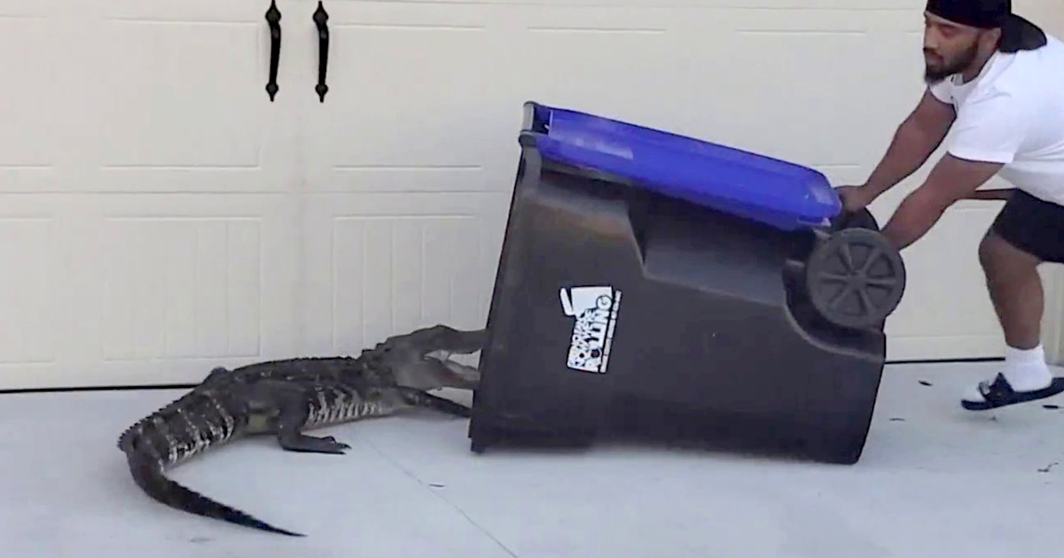 Wild video shows Florida transplant trapping alligator his 'own way' — in a garbage bin